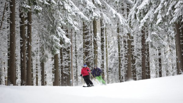 Skiers going by snow-covered pines at Holiday Valley Resort